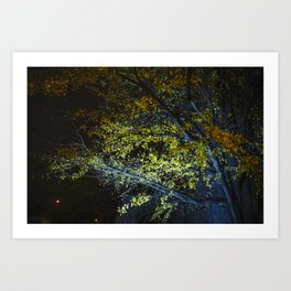 Autumn Tree at Night Art Print