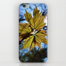 'Springtime' iPhone & iPod Skin