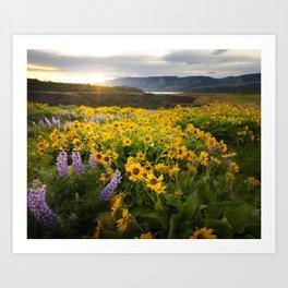 Oregon Wildflowers Art Print