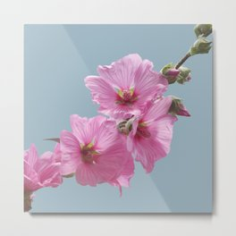 Pink Mallow Flowers Photo to Paint on Blue Metal Print