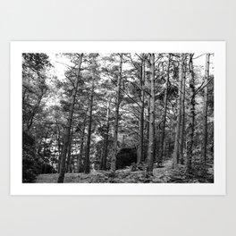 Trees 3 Art Print