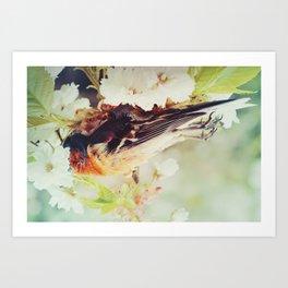 Fallen Bird Art Print