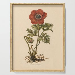 1800s Encyclopedia Lithograph of Anemone Flower Serving Tray
