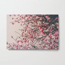 Magnolia Blooms Metal Print