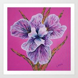 On Persian Pink Art Print