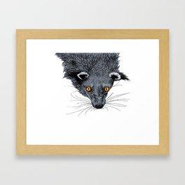 Binturong Framed Art Print