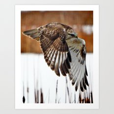 Rough-legged Hawk Art Print