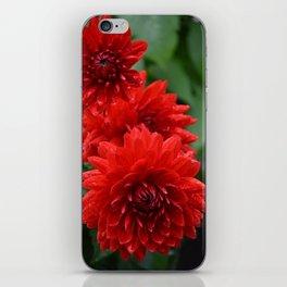 Fresh Rain Drops - Red Dahlia iPhone Skin