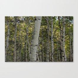 Aspen Country Canvas Print