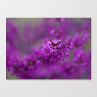 focus Canvas Prints featuring Focus by Mark Alder