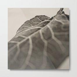 The Collard, Green Metal Print