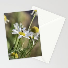 daisy in late afternoon light Stationery Cards