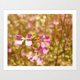 Fort Brag Flowers V Art Print