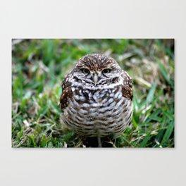 Owl. Photography Canvas Print