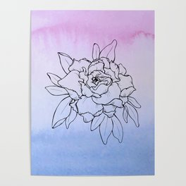 Peony Blossom with Ombre Background Poster
