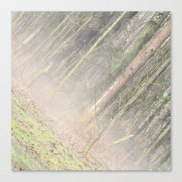 Spring Forest With Fog Canvas Print