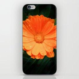 Captivating Calendula iPhone Skin