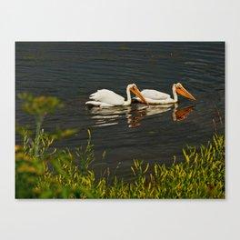 Pelicans in Edmonton - Hermitage Canvas Print