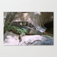 crocodile Canvas Prints featuring crocodile by lennyfdzz
