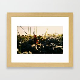 Cherry Fields Framed Art Print