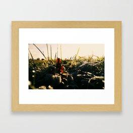 Cherry Fields Framed Art Print