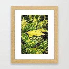 Jax On Paul Ekk Framed Art Print
