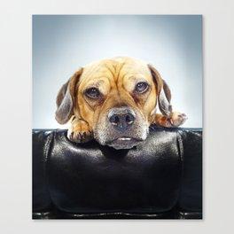 Super Pets Series 1 - Super Oaks 4 Canvas Print