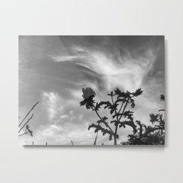 116 | austin Metal Print