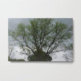 Texas Mesquite Tree Metal Print