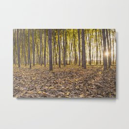 Sunbeams between tree trunks in a forest in autumn Metal Print