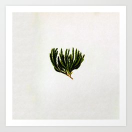 Botanical Moss Art Print