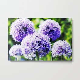 Fuzzy Blue Alliums Metal Print