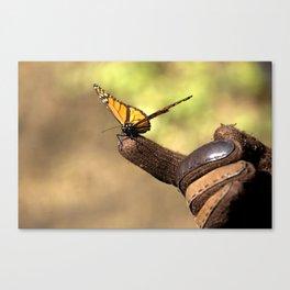 Monarch friend Canvas Print