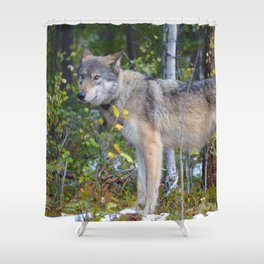 Wolf encounter in Jasper National Park Shower Curtain