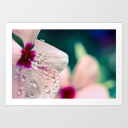 Water and Flower Art Print