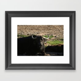 African Buffalo Dining Framed Art Print