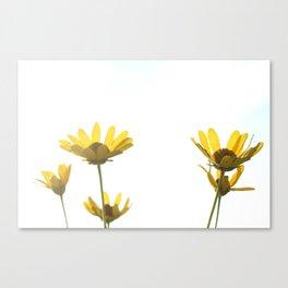 white wildflowers Canvas Print