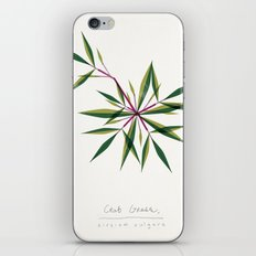Crab Grass Modern Botanical iPhone & iPod Skin