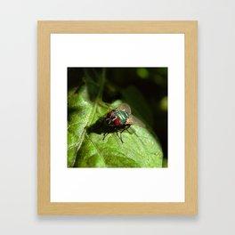 But A Fly Framed Art Print