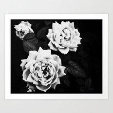 trio of roses Art Print