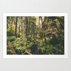 Forest XIV Art Print