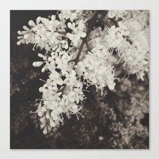 A Delicate Presence Canvas Print