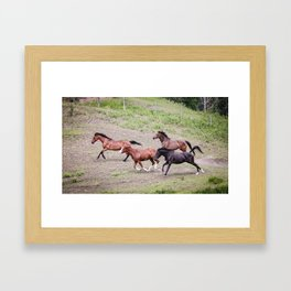 Running Herd Framed Art Print
