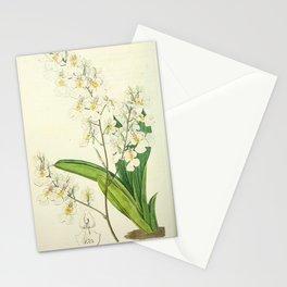 Flower 1787 oncidium pulchellum Pretty Oncidium19 Stationery Cards
