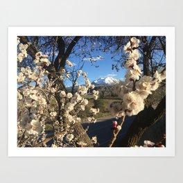 Sopris Bloom Art Print