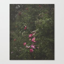 Focus on Beauty Canvas Print