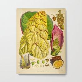 Illustration Of Himalayan Plants Vintage Scientific Botanical Illustration Metal Print