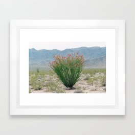 Ocotillo Plant (Anza Borrego Desert, California) Framed Art Print