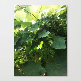 Green grapes Nature Design Canvas Print