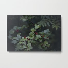 Mountain currant Metal Print